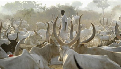 FG Suspends Planned RUGA Programme